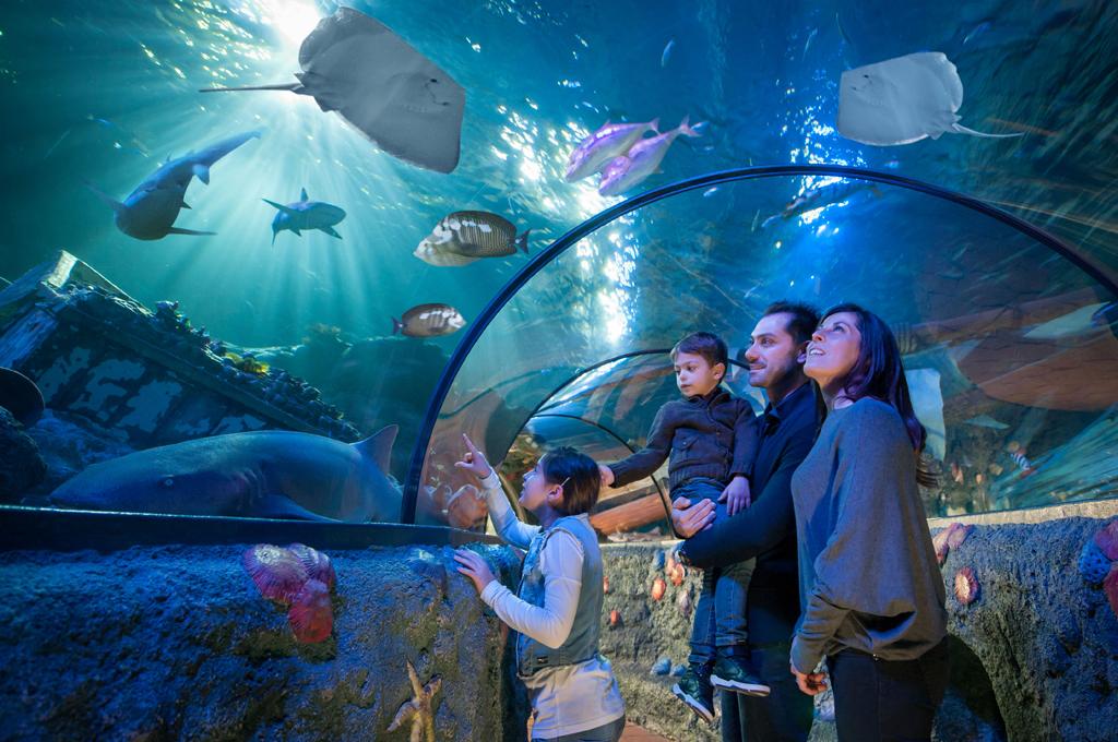 Gardaland SEA LIFE Aquarium - Mondoparchi - Tanto divertimento gratis ...